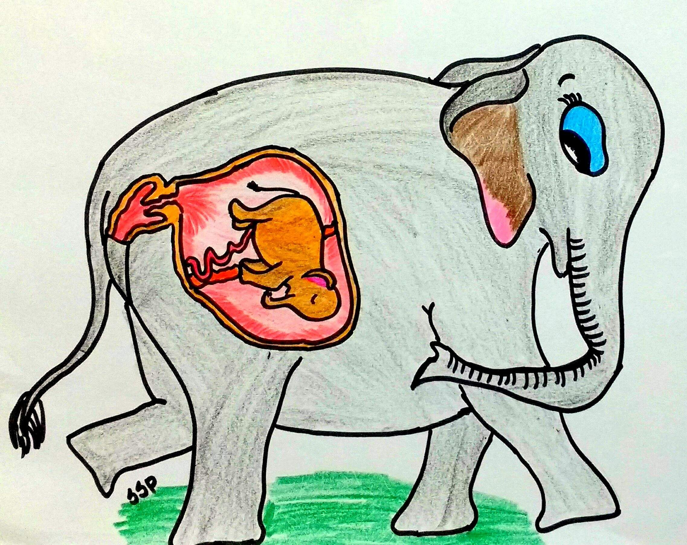 Addressing The Baby Elephant How This Iisc Researcher S Cartoons Are Spreading Awareness On Elephan Edexlive