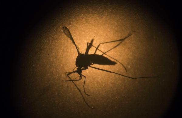 Zika-AP55