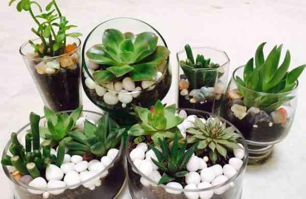 Little Greens' terrariums