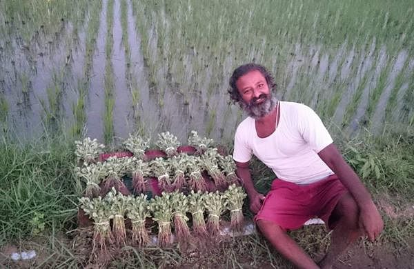 Hari, who returned to India in 2015, bought a piece of land and traveled around Tamil Nadu in search of indigenous seeds and cultivation methods