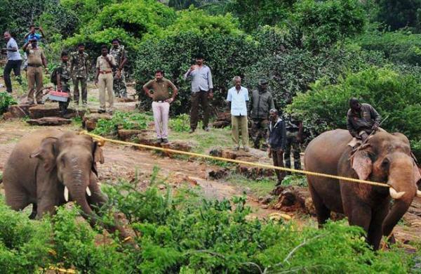 elephants7593