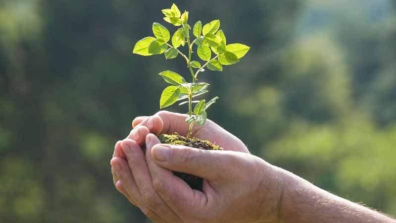 plant-a-tree-1