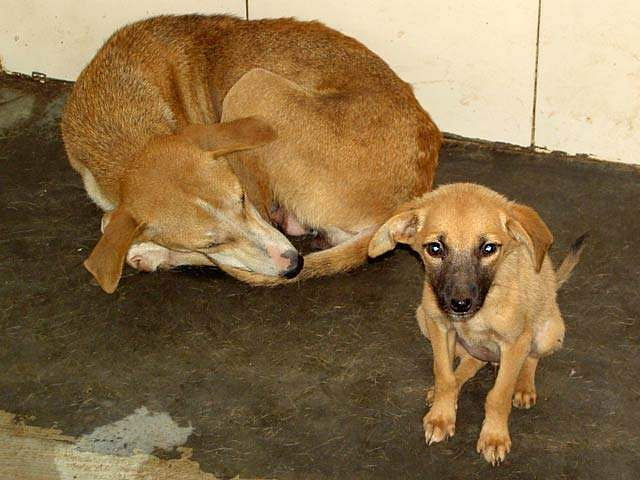 Dog-rescue-shelter