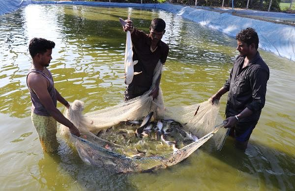 Tamil Nadu Dr J Jayalalithaa Fisheries University
