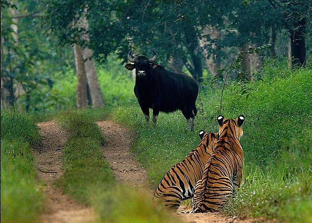 The Bhadra Reserve Forest