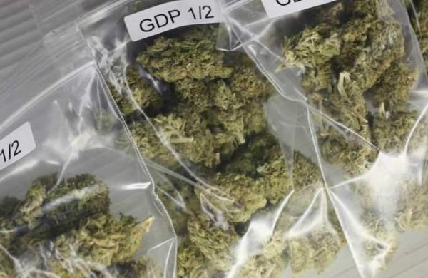 10 kg seized ganja