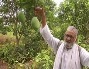 haji_kalimullah_in_his_orchard_1706chn_82