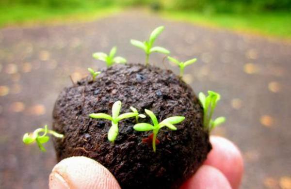 seed_balls_tsj117_1513084142