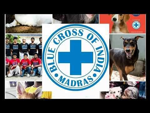 Blue Cross 'Click to Rescue'