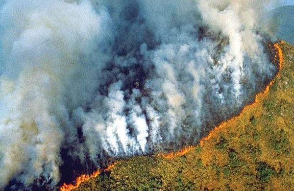 Amozon forest fire