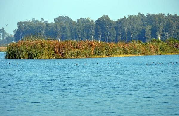 Asan_Conservation_Reserve_–_Ashish_Gaur