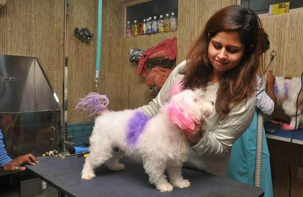 Kashika at her pet grooming centre| Pic: Kashika Arora