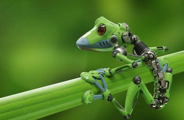 Robot-frog-2