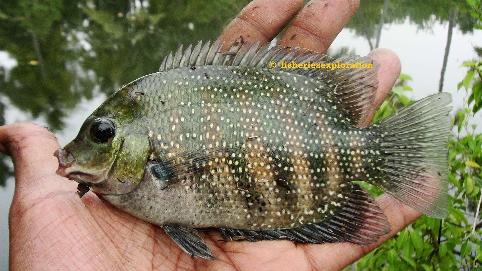 Fisheries Exploration & Conservation
