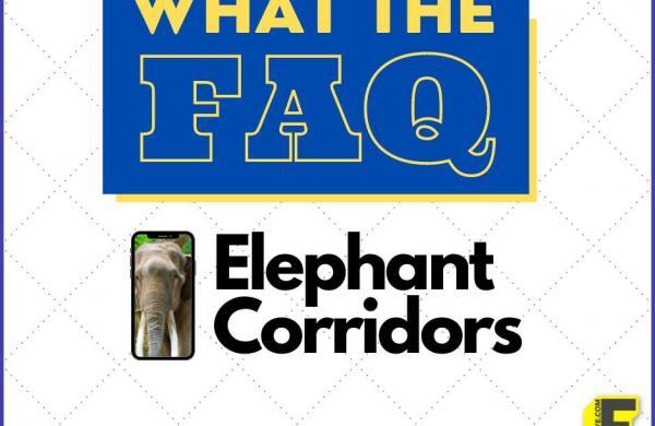 What_the_FAQ_Oct_1