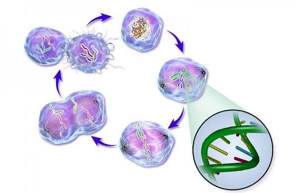 Life of a Cancer Cell