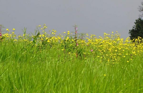 nature_-_Flickr