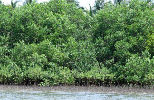Mangroves_EPS