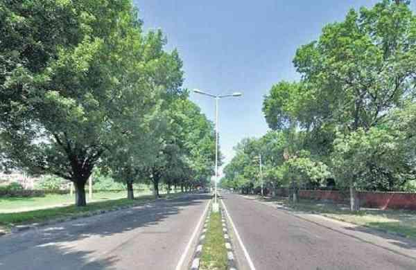 CHANDIGARH-trees